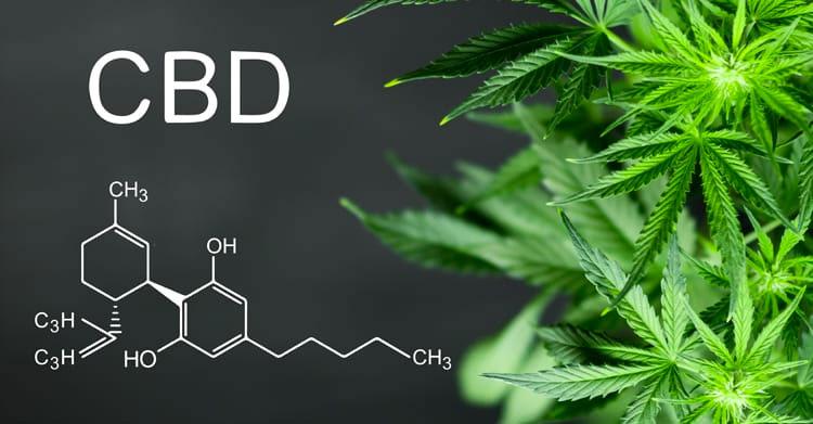 El cannabis: una alternativa médica, Cómo actúa el cannabis medicinal