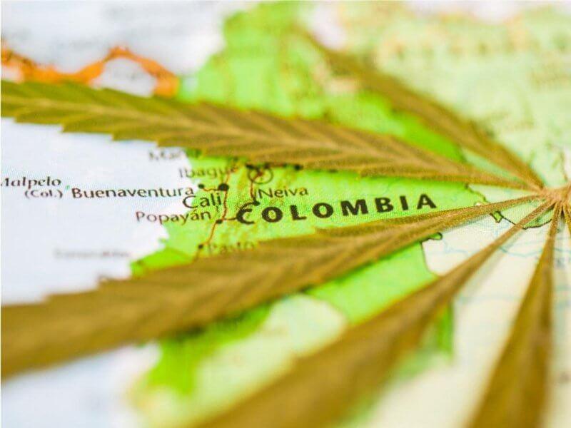La mayor producción decannabismedicinal en el mundo está en Colombia. Colombia tiene 44% de la producción mundial de cannabis